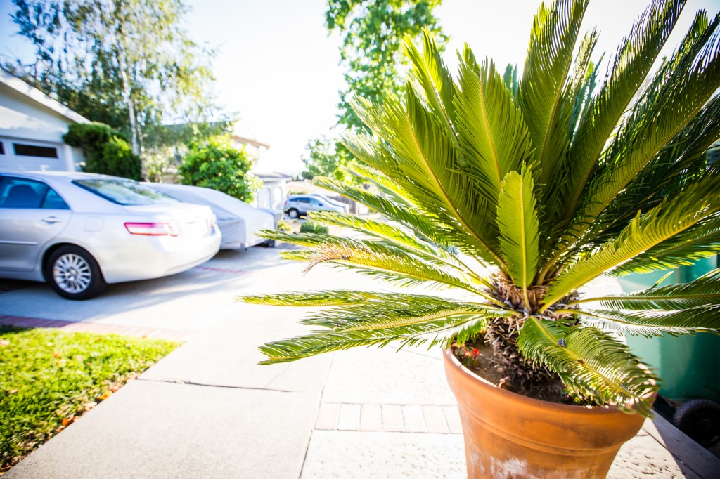 palm tree on next to neighborhood sidewalk