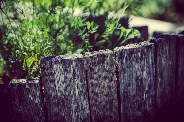 fence and plants