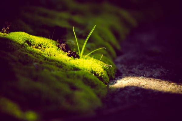 beam of sunlight across moss