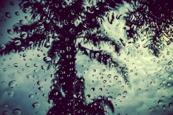 palm tree through rain drops