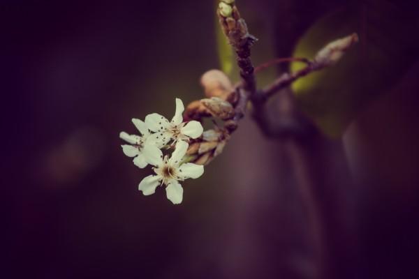 flower | photograph by Brian J. Matis