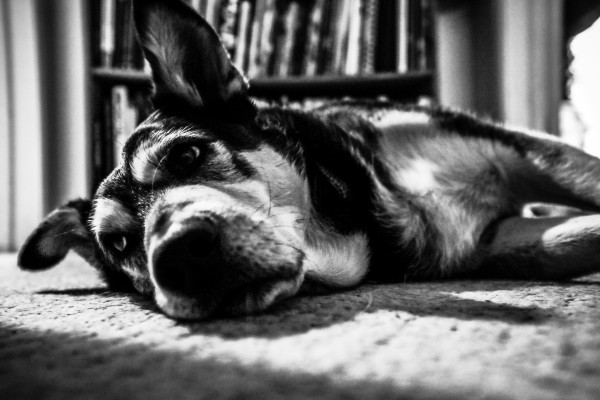 lazy dog | photograph by Brian J. Matis
